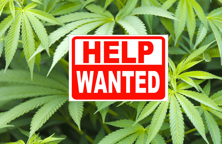 helpwantedpotjobs