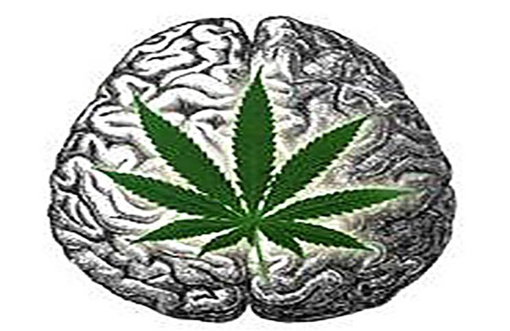 marijuana and the brain Brain, volume 126, issue 6, 1 june 2003 o'leary ds, ehrhardt jc, et al effects of frequent marijuana use on brain tissue volume and composition neuroreport.