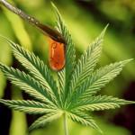 marijuana stocks to buy 2019