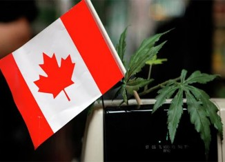 marijuana-stocks-canadian-canada