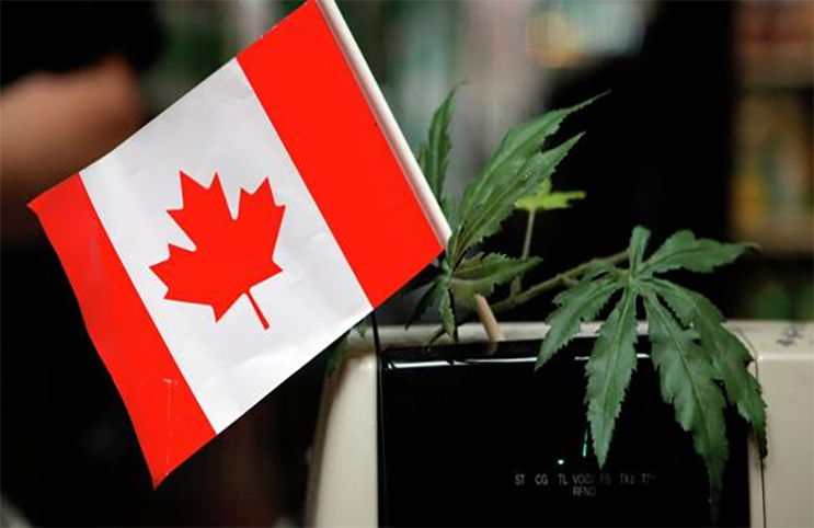 marijuana-stocks-canadian-canada