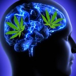 Marijuana-Stocks-Cannais On The Brain