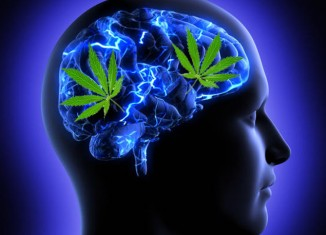 Marijuana-Stocks-Cannais On The Brain