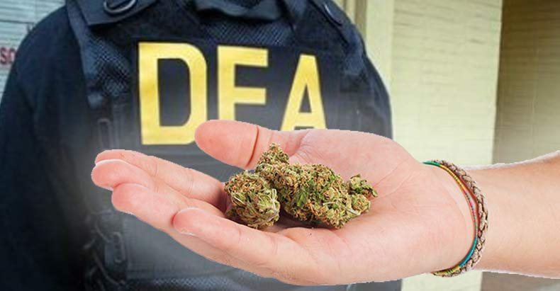 Image result for dea marijuana