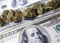 marijuana-stocks-cannabis-benjamins