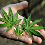 Marijuana-Stocks-mmj leaves