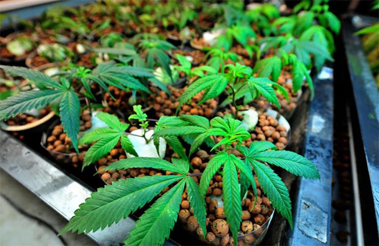 Marijuana-Stocks-gardening