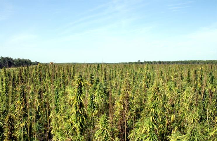 Tennessee Bill Helps Expand Hemp Market - Marijuana Stocks