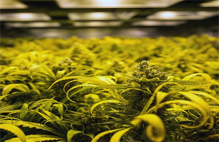 Marijuana-Stocks-hemp-5