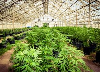Marijuana-Stocks-Cannabis-3
