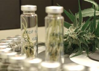 Marijuana Stocks Cannabis Stocks
