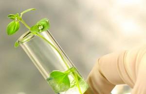 Marijuana-stocks-biotech