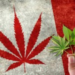 marijuana-stocks-canadian-cannabis-