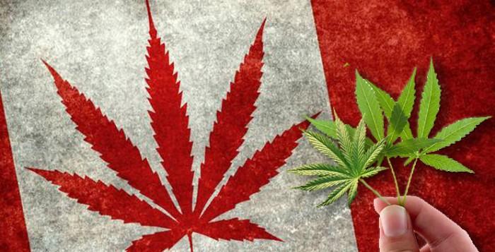 marijuana-stocks-canadian-cannabis-
