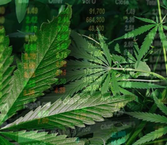 marijuana stocks 2017