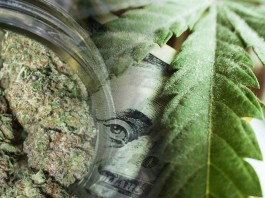 marijuana stocks august 16