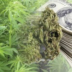 marijuana stocks august 21 2017