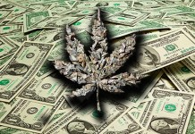 marijuana stocks top news