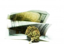 marijuana stocks earnings season
