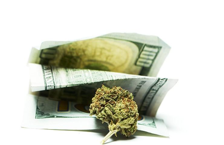 marijuana stocks earnings season