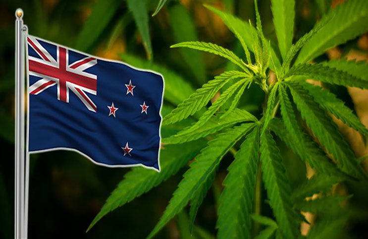 Image result for new zealand cannabis