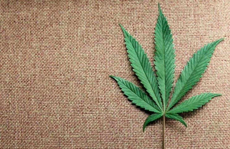 marijuana-diet