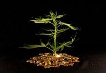 Mj-stocks-pennies