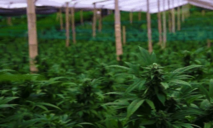 Marijuana Stocks July 2018
