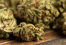 craft-marijuana