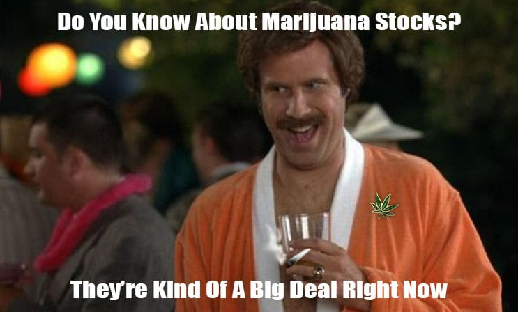 pot stocks