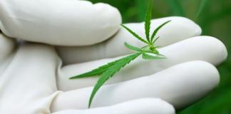 marijuana stocks to buy canada