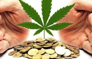 Marijuana risk Penny pot stocks