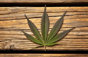 marijuana stocks to watch 2019