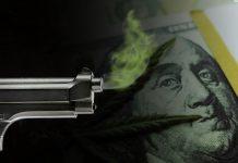 marijuana stock smoking gun