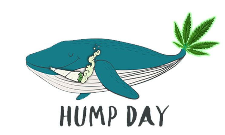 hump day marijuana stocks