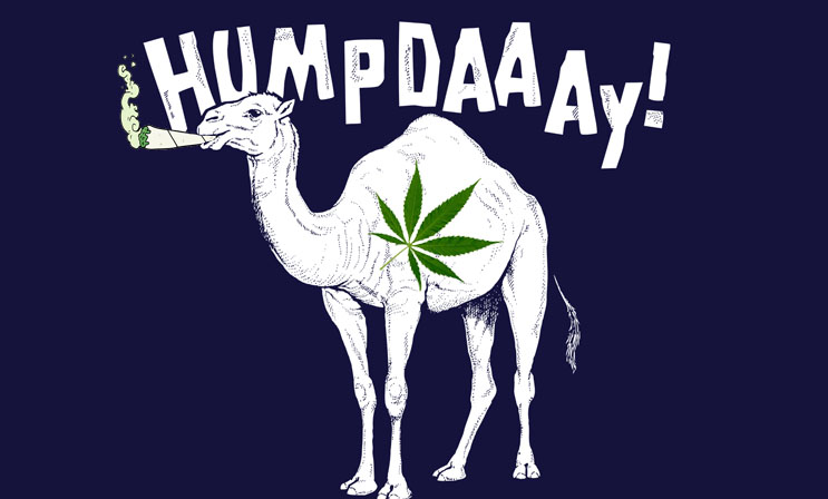 marijuana stocks humpday camel