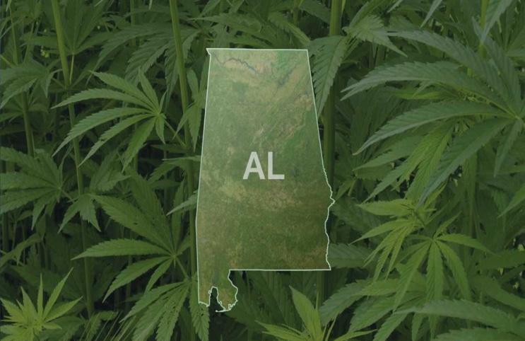 alabama-marijuana-