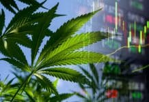 marijuana stocks june