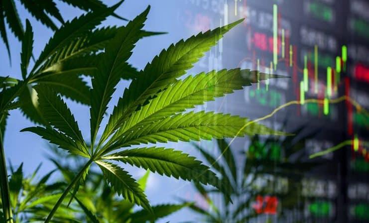 marijuana stocks june