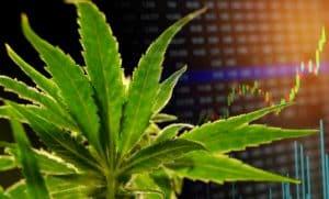 marijuana-stocks-news-august