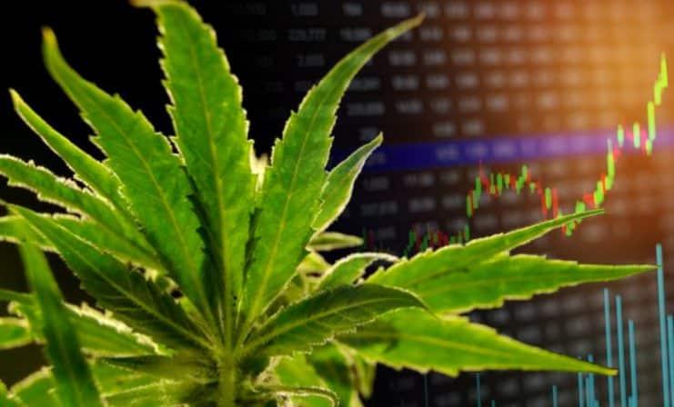 marijuana-stocks-news-june-6-2019