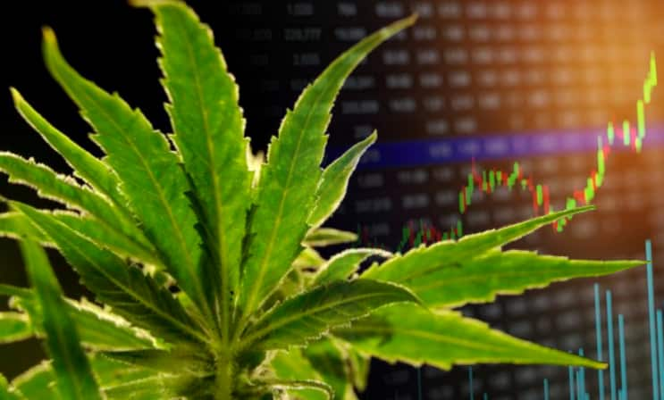 marijuana-stocks-news-june-6-2019
