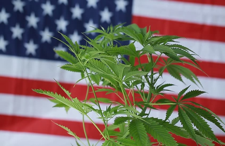 US marijuana stocks to watch