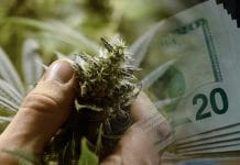 make money with marijuana stocks