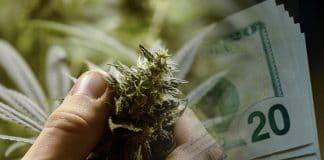 make money with marijuana stocks