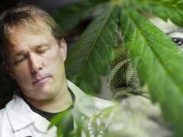 marijuana stocks bruce linton