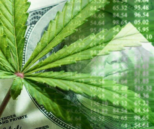marijuana stocks to buy