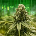 best marijuana stocks to buy