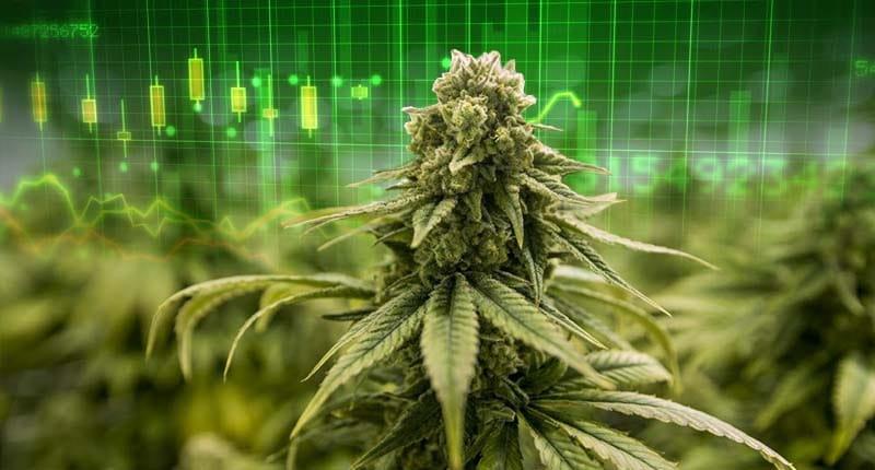 best marijuana stocks to buy