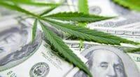 make money marijuana stocks
